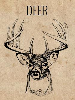 game-deer