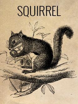 game-squirrel