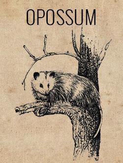 game-opossum