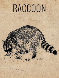 game-raccoon