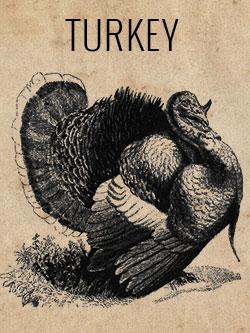 game-turkey