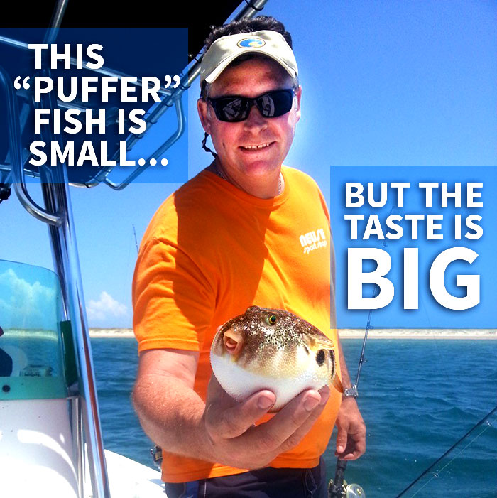Kevin Herrington catches a small puffer fish with big taste